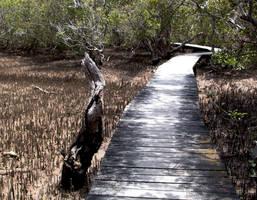 Mangrove Boardwalk by KilowattKatie