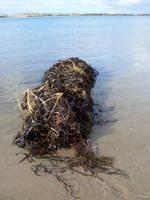 Seaweed by KilowattKatie
