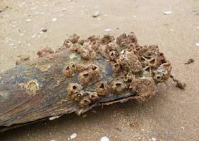 Mussel by KilowattKatie