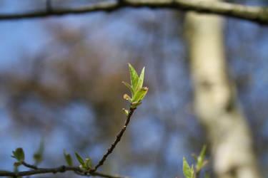 Spring leaf by MissKyr