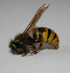 Wasp by MissKyr