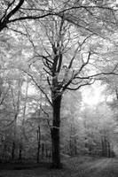 Trees of white by Vargson