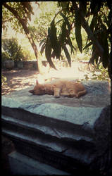 Sleepy Cat in Rhodes by Eleanor-the-Second
