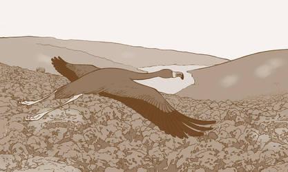 Flamingo by ellianounoursblanc