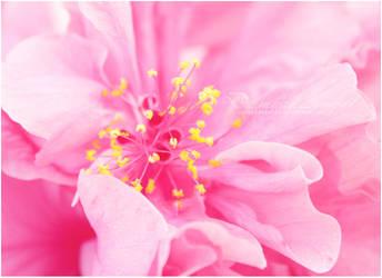 Pollen by damaskangel