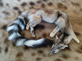 Mountable ringtail [SOLD] by MorbidScavenger