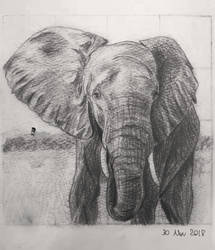 Elephant by Novembre17