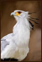 Bird Study 001 by crystaleyes909