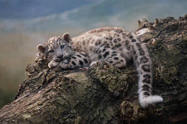 Snow Leopard cub by Tygrik