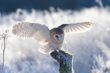 Soft landing by Tygrik