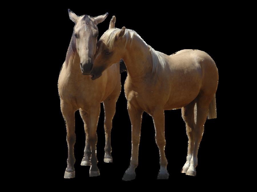 2 Horses Precut By MollysHorsePrecuts