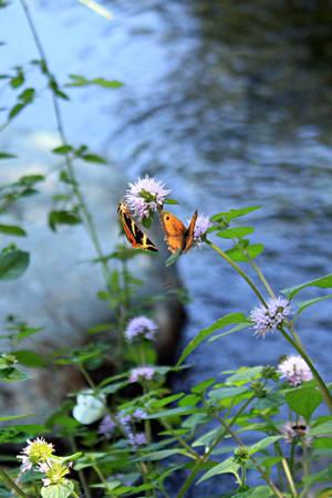 butterflies by Jaiiko