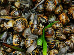 Snails. A LOT of snails. by OneOutOfEight