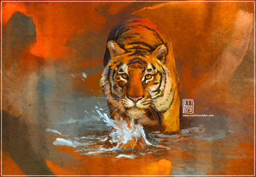 _study tiger by martinhoulden
