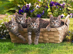 Basket with kittens by Egor412112