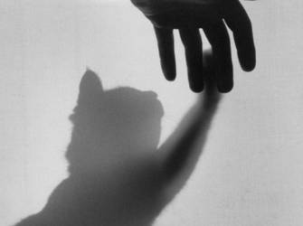 Ghost of a Kitten by Ashli-Eliz