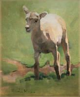 Bighorn Sheep Lamb by 2xreavis