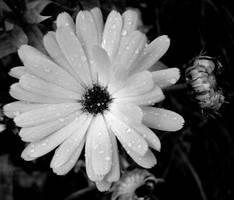 Black + White by ryano292