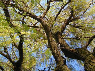 Skaryszewski Park - Willow2 by PiotrekHenry