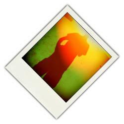 Sunshadow 45Degree Pola by s-c-w