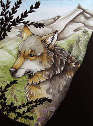 Cover ''Okami life from wolves'' by KaylaOkami