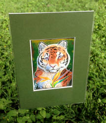Tiger ACEO by Tassy