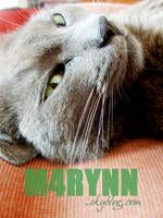My catwoman. by M4RYNN
