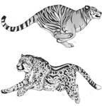 big cat studies by Ashivrn