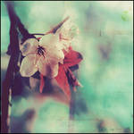 Spring by loveSunshines