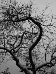 Old branches by Mikadomino