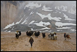 Yak herders at Kagmara La by Dominion-Photography