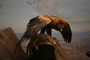 Eagle Wing by newdystock