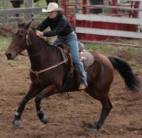 Barrel Racing by newdystock