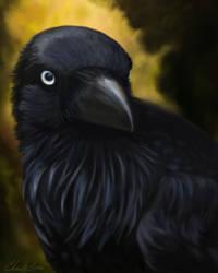 Raven by grumkinz