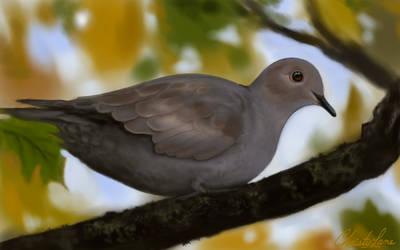 Dove by grumkinz