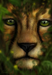 Cheetah by grumkinz