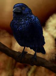 Fall Raven by grumkinz