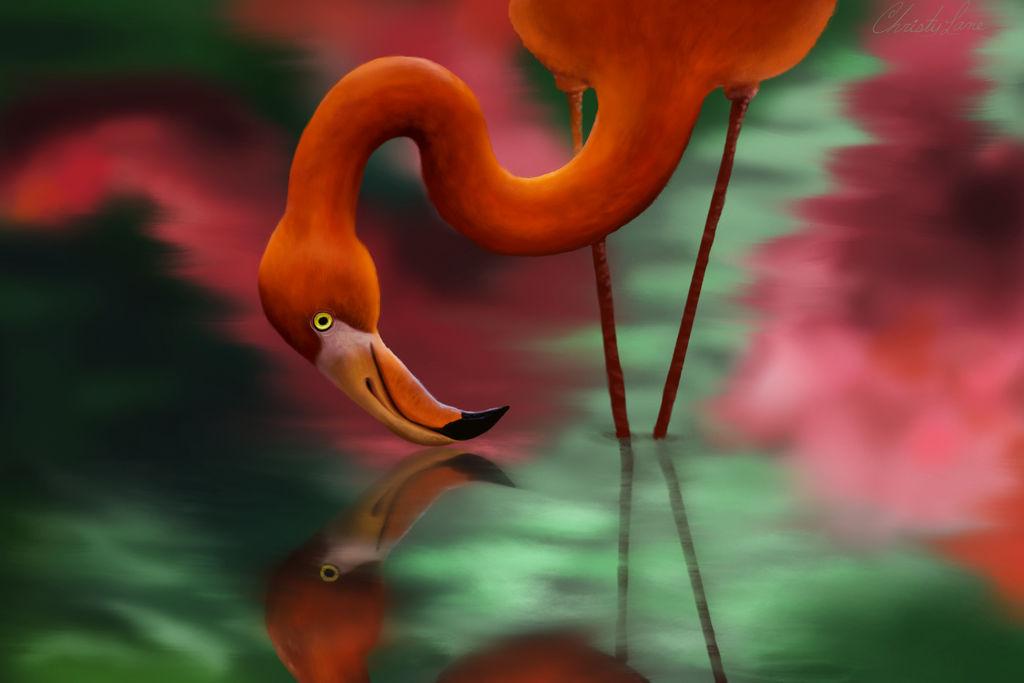Flamingo by grumkinz