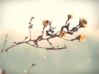 winter again by czarnemleko