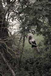 From the Lost in the Woods series by Bach Sessions by AlaisPeach