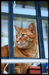Cat by NeoRavenous