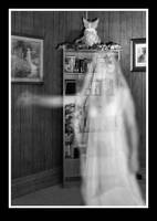 Ghost by laurna