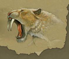 smilodon study by uberzilla