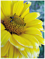 Bugs on Yellow by Rosaka-Chan