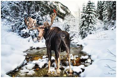 Moose by xxCHARLiE