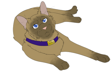 Warrior Cats #062 - Sasha by Kuroi-Hitsuji