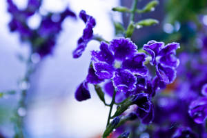 Purple Plush by jardorocks