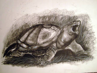 Snapping Turtle in Charcoal by rylothean