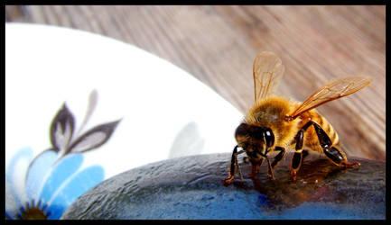Honeybees in the trees by nuuskmommik
