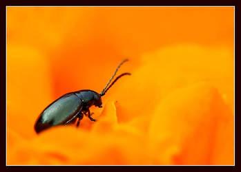 Orange Country by damcigpa